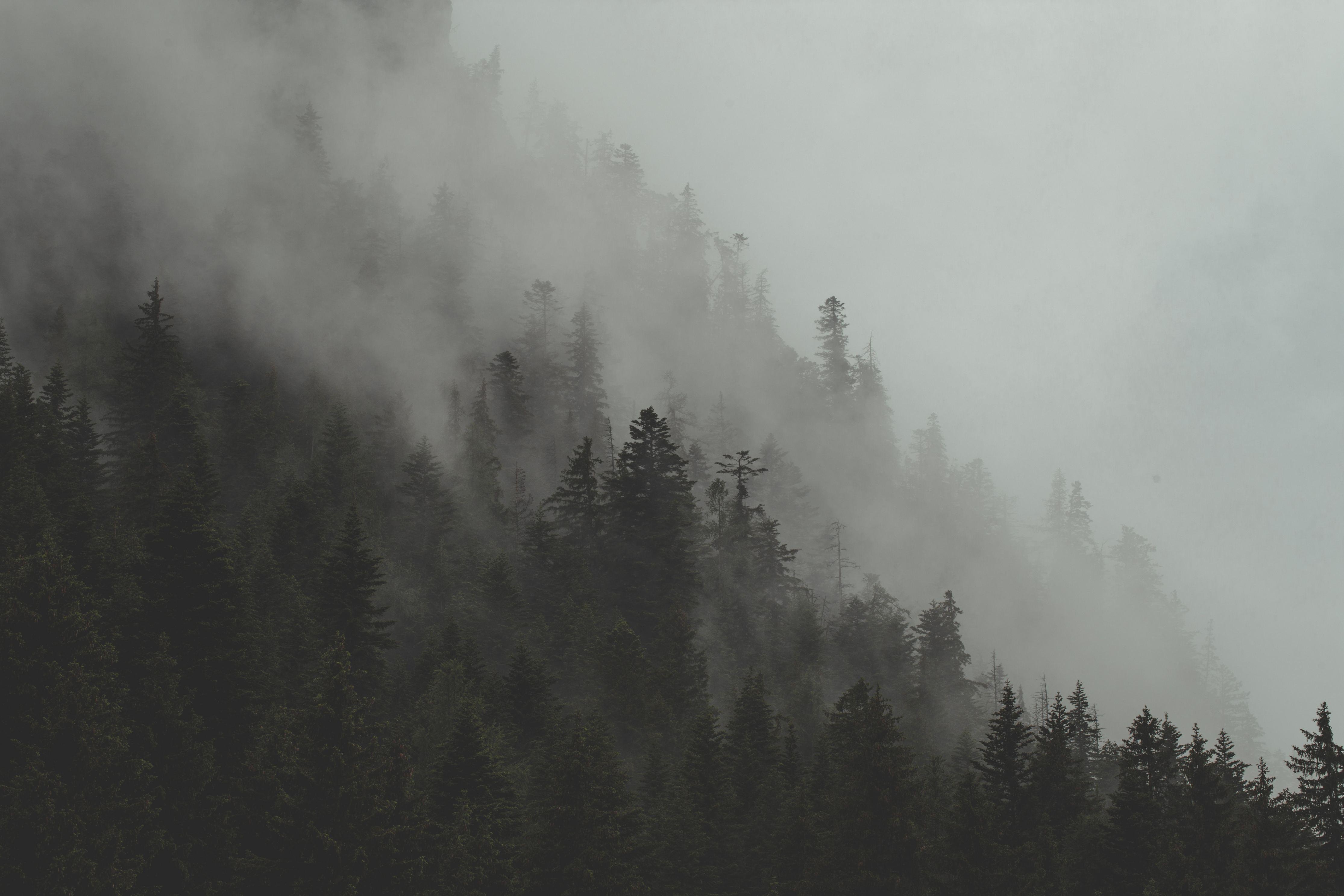 https://magdeleine.co/photo-by-jp-valery-n-1299/ - Fog Rolls Through Forest Hillside